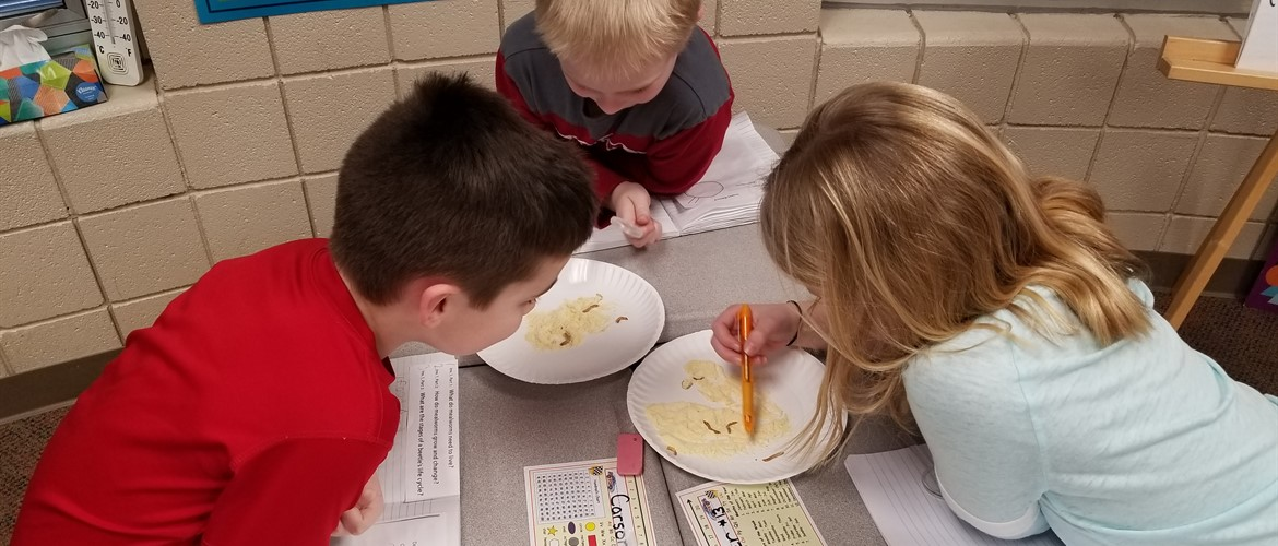 Students observing meal worms.
